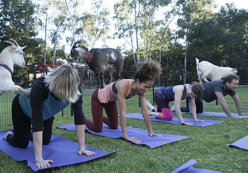 Stef and Lena at goat yoga in The Fosters 5x18